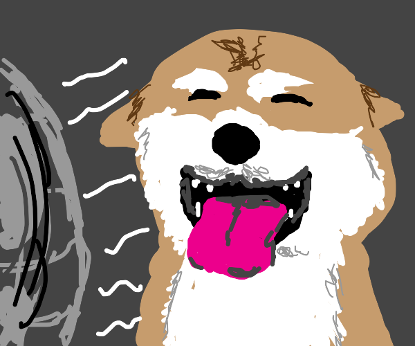 doggo using a fan