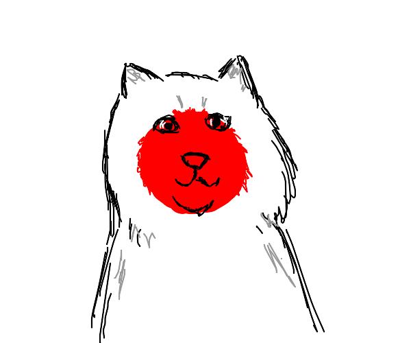 Cat that looks like Japanese flag