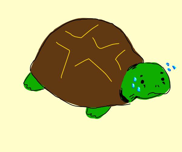 Sweaty Turtle