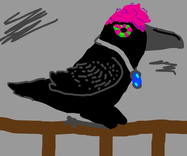 Peaceful Crow