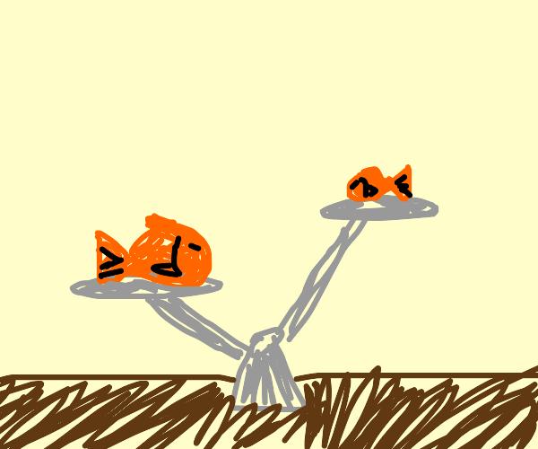 Heavy Goldfish