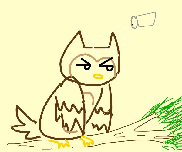 Salty Owl