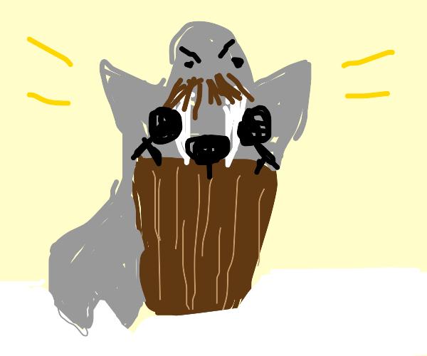walrus rights