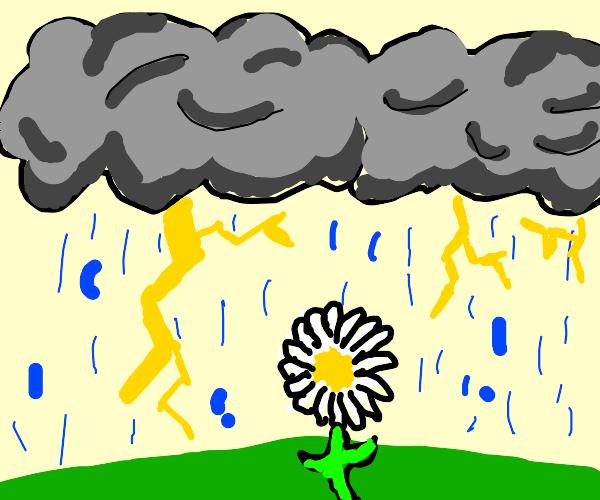 Daisy in a thunderstorm