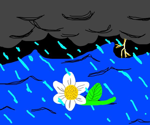 Flower adrift in stormy sea