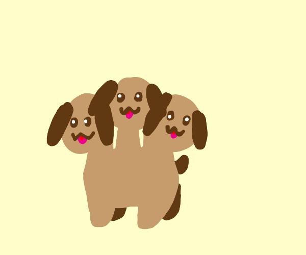 3 headed puppy