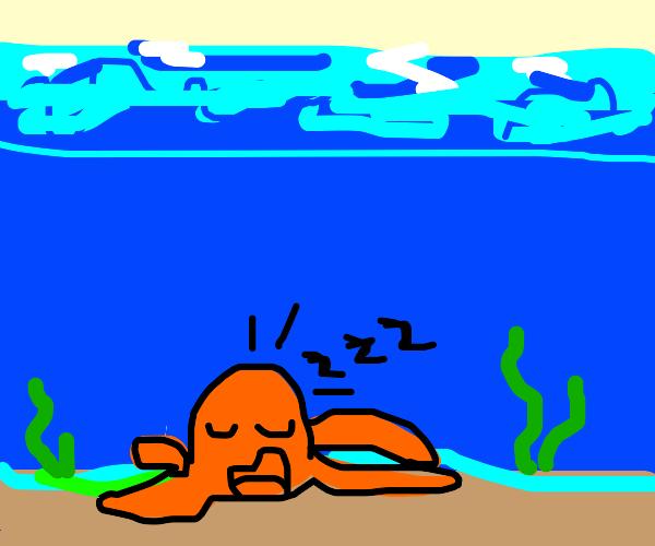 Octopus snoring in its underwater bed
