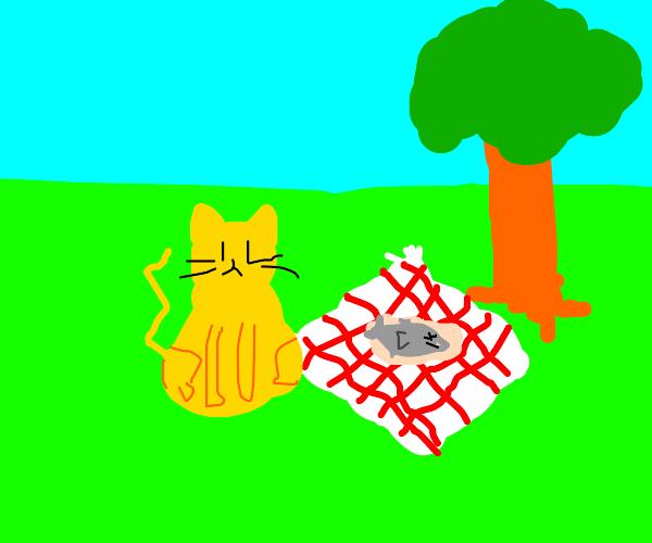 Cat sitting at a picnic