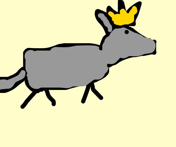 Armadillo King
