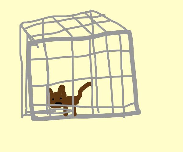 Pet Jail