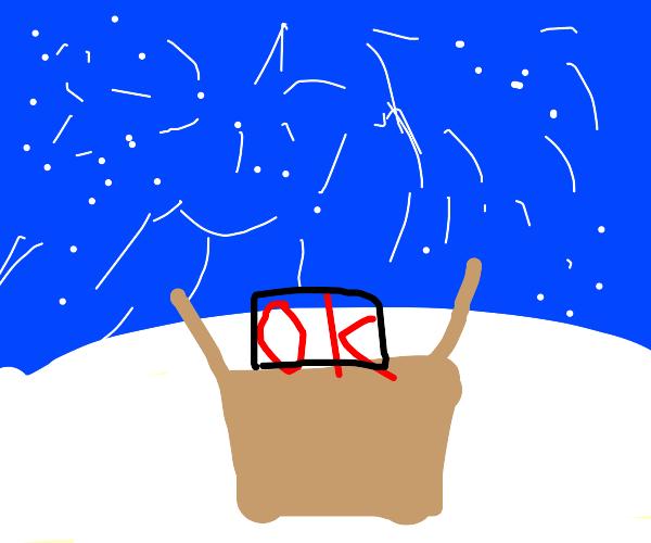 Red OK in a cardboard box in a snowstorm