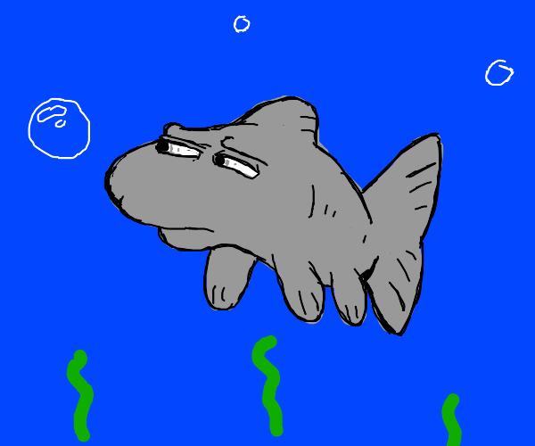 Suspiciously Secretive Fish