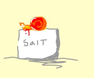 Snail on a block of salt