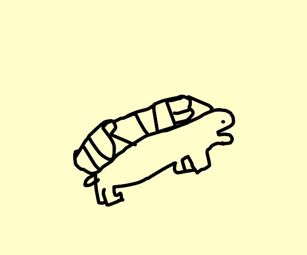 turtle labeled turtle