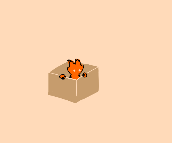 Stray Kitty in a BOX