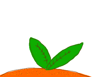 those leaves on top of an orange