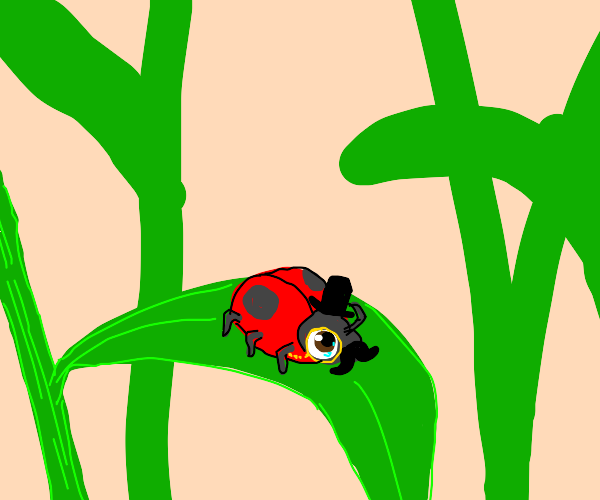dapper ladybug