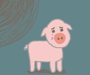 depressed piglet