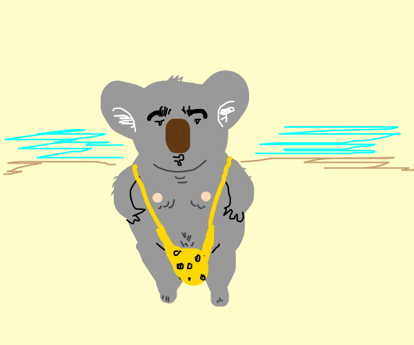 Sexy koala