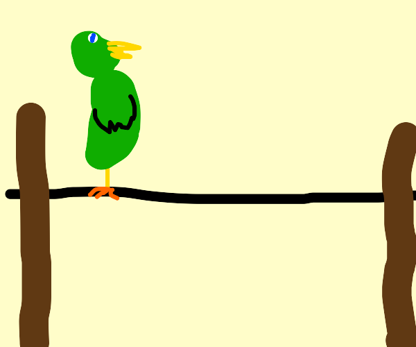 parrot on a telephone wire