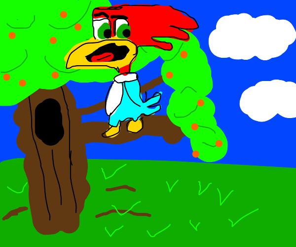Woodpecker love orange