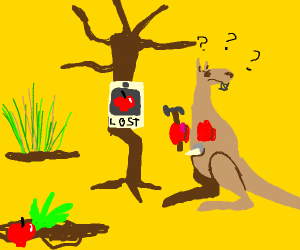 the kangaroo lost his dear beloved fruits