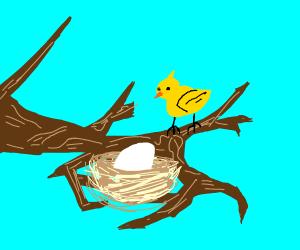 eg in nest