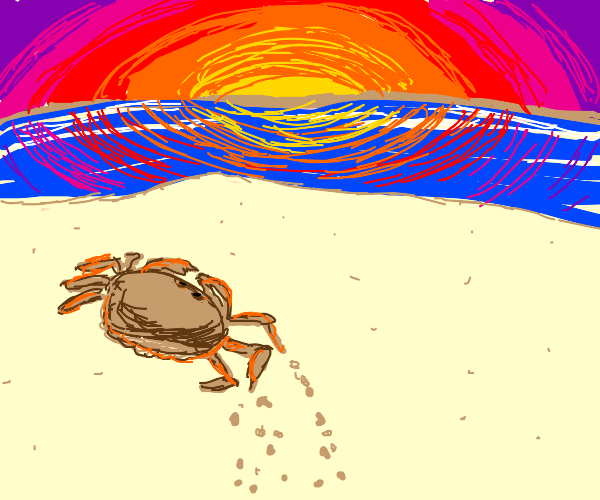 Sparkling crab walks into the sunset