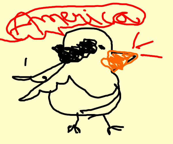 "bald eagles says ""AMERICA"""