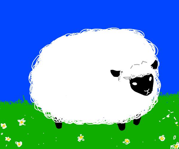 A good drawing of Sheep