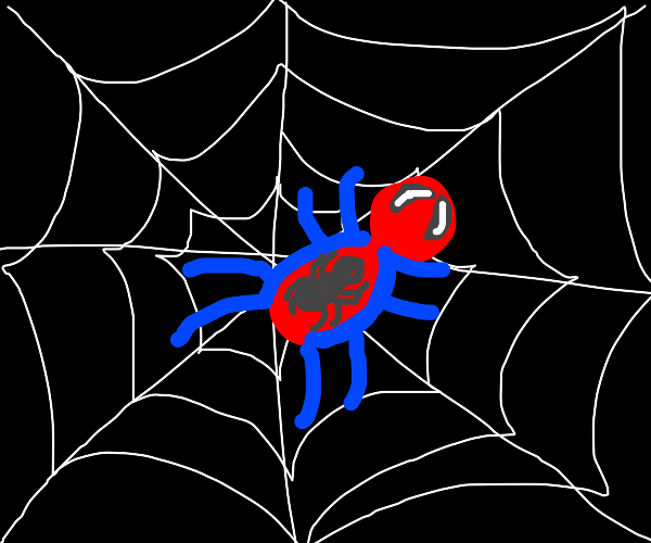 Spider Spider, Spider Spider