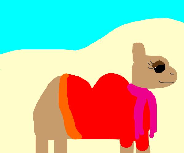 Camel dressed for winter