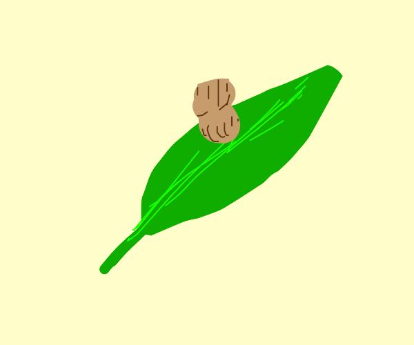 Mr Peanut on a leaf