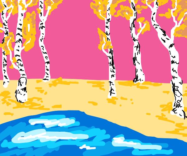 scenery of birch trees in the fall near lake