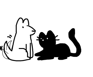 cute cat with doggo