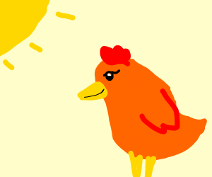 a chicken in the morning