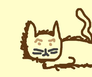 Meme cat is pissed