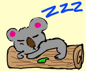 Koala  sleeping on log
