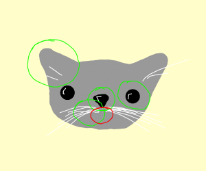 A cat with no mouth