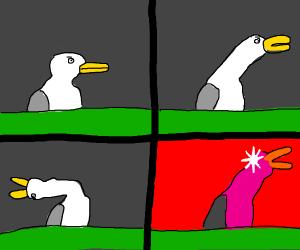 Seagull Meme