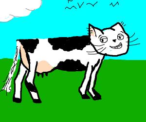 Holstein cat?