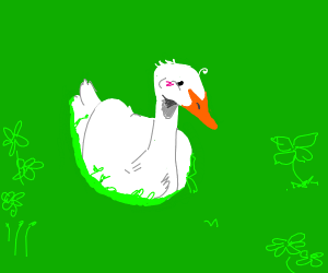 duck lying down in grass