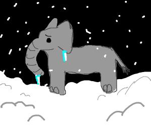 A cold elephant