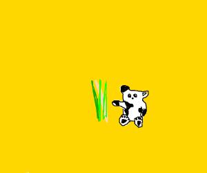 Panda eating bambo