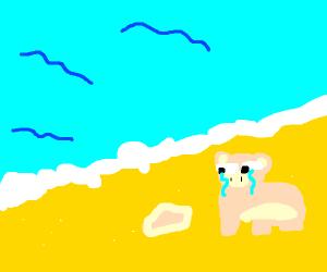 Ham on a Beach