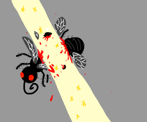 Fly is cut apart by light