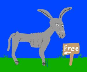 free starving donkey