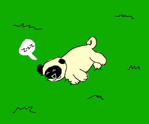 Pug lying down