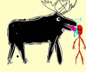 moose licking red man