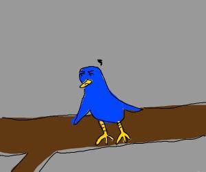 blue bird sitting but it's mad